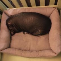 пумба спит
